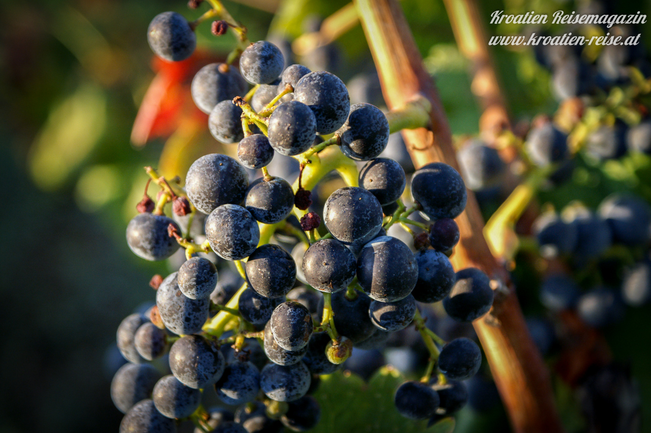 Essen & Trinken in Kroatien - Kroatische Küche & Spezialitäten