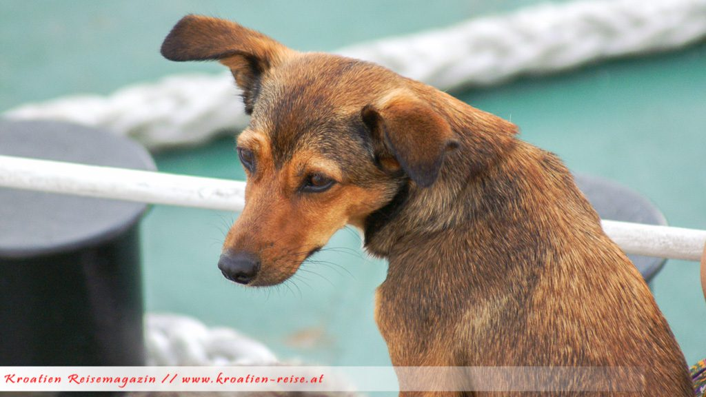 Hund Kroatien