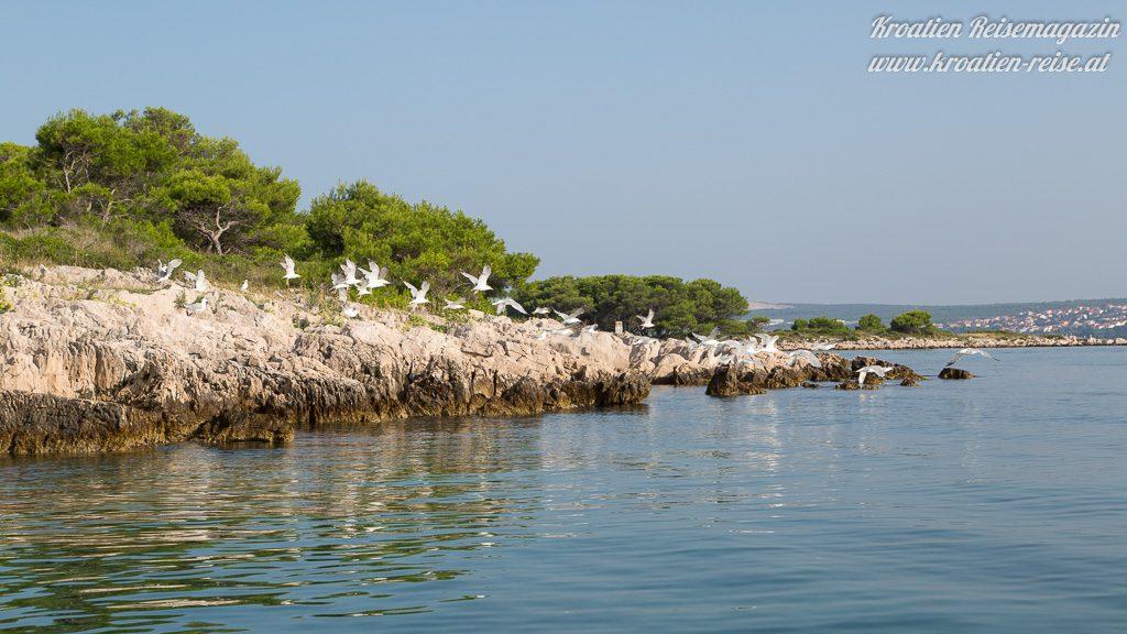 Insel Natur Kroatien