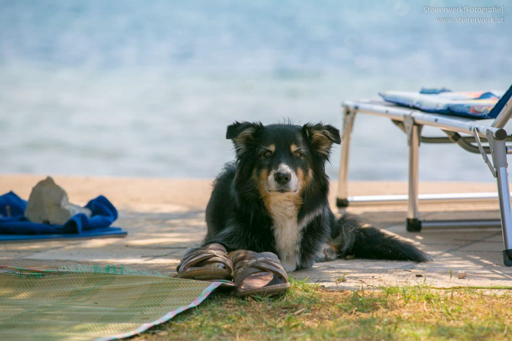 Hund am Strand in Kroatien